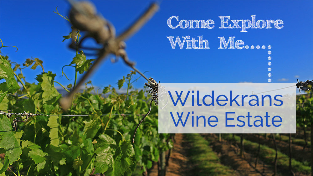 Come Explore With Me Wildekrans Wine Estate on My Lime Boots